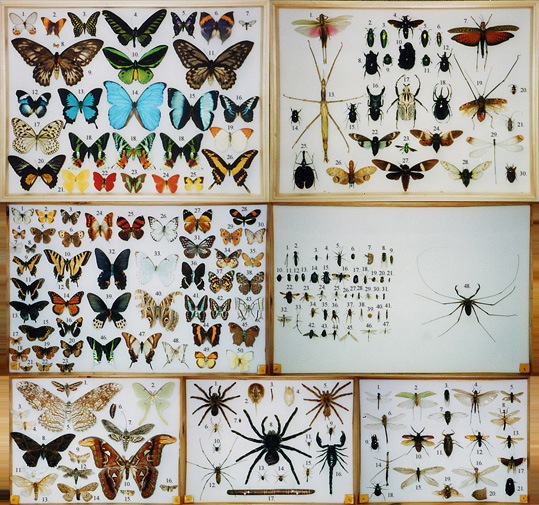See also my Old Bug Collection (1990) and bug artwork .